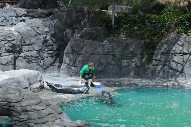 Foto 2. Zoo Aquarium