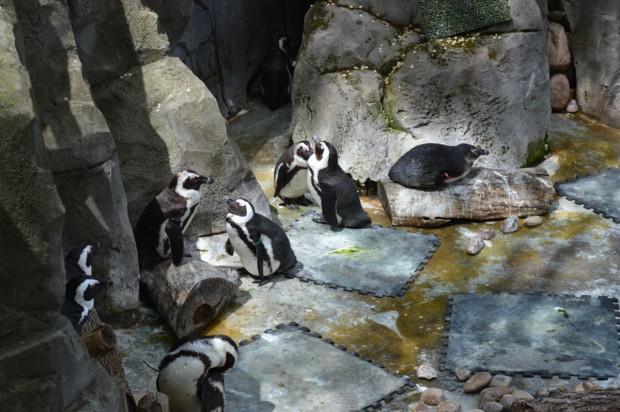 Foto 4. Zoo Aquarium