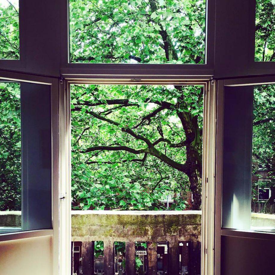 Verde invadindo os cantos da casa