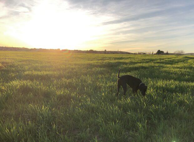 Serracines com cachorro- morar nos arredores de Madrid